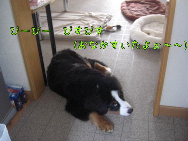 CIMG2943.jpg