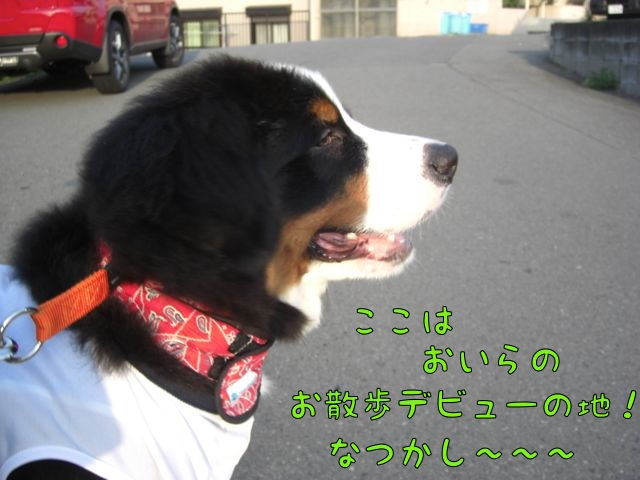 CIMG3148.jpg