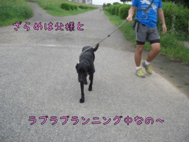 CIMG3814.jpg