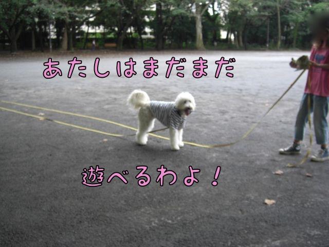 CIMG3863.jpg