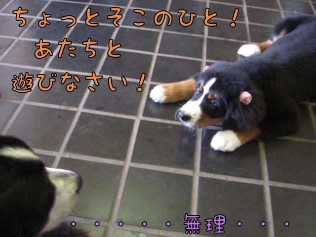 CIMG4188.jpg