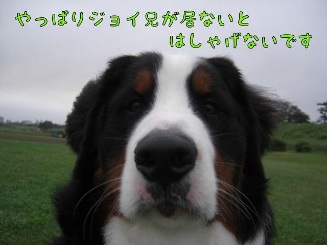 CIMG4632.jpg