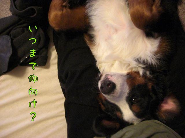 CIMG4688.jpg