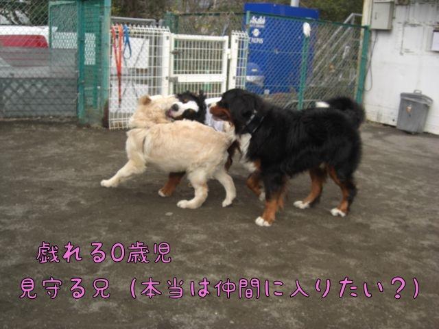 CIMG5239.jpg