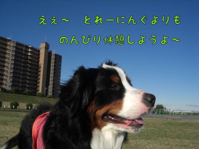 CIMG5366.jpg