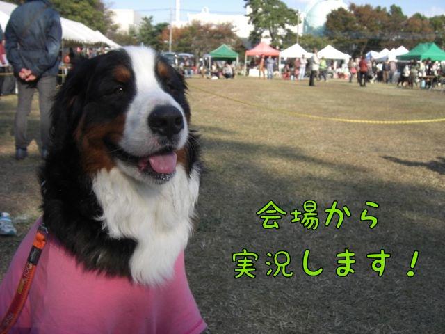 CIMG5455.jpg