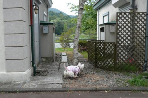 hosourohaatui2.jpg