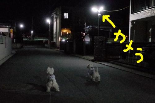 nichibotugaichibanhayaihida3.jpg