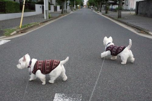 yasetesweaterkireruyouni2.jpg