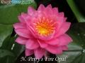 N.Perry's Fire Opal