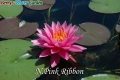 N.Pink Ribbon