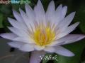 N.Blink