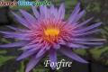 N.Foxfire