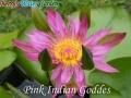 N.Pink Indian Goddes