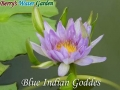 N.Blue Indian Goddes