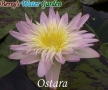 N.Ostara