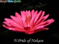 N.Pride of Nakasu