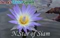 N.Star of Siam