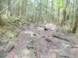 溶岩質の走路
