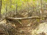登山道をふさぐ倒木