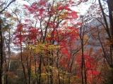 紅葉の中を走る