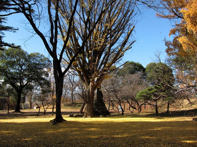 上田公園本丸跡の大銀杏