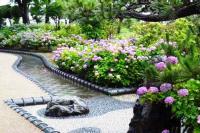 性海寺歴史公園紫陽花祭り6
