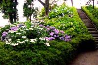性海寺歴史公園紫陽花祭り2