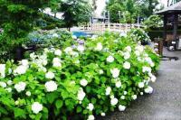 性海寺歴史公園紫陽花祭り