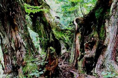 21世紀の森公園 自然観察道3