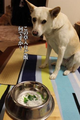 IMG_9009七草