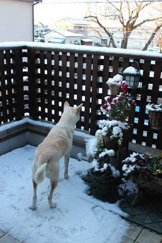IMG_9580雪