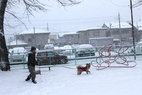 IMG_9644雪