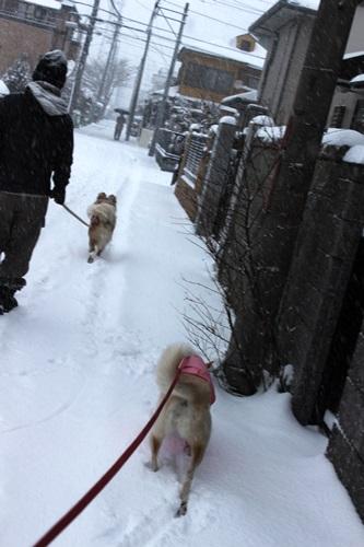IMG_9652雪