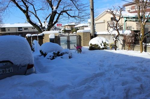 IMG_9676雪