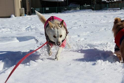IMG_9732雪