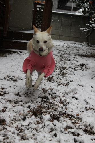 IMG_9961雪