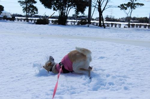 IMG_0044雪ひめ