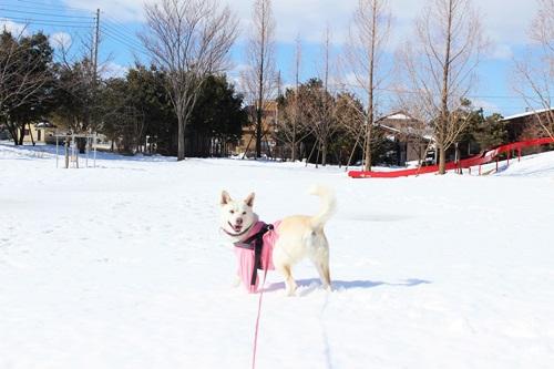 IMG_0054雪ひめ