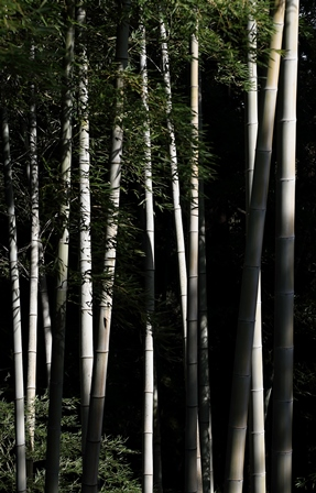 2011-10-08 華2863