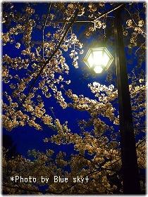 街灯と夜桜