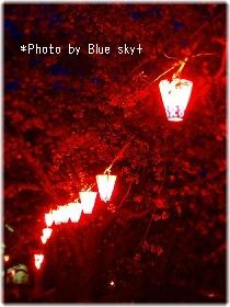夜桜と提灯