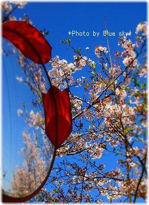 ミラー越し桜