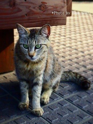 温泉街のネコ