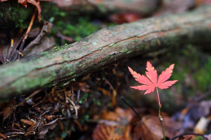 a_AutumnJukai.jpg