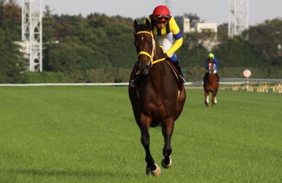 マルセリーナ府中牝馬