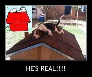 Real+Snoopy+by+Wimp+com_convert_20130707113533.jpg