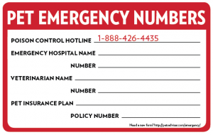 emergency-form-for-pets_convert_20130812155953.png