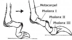 toenails-300x166.jpg