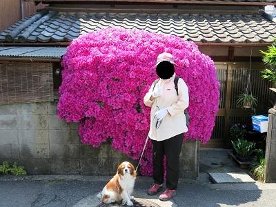 母と散歩1